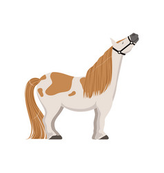 Cute spotted pony thoroughbred horse vector