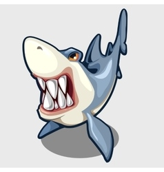 Evil shark with sharp teeth isolated vector image
