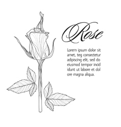 Greeting card with rose bud ink sketch vector image vector image