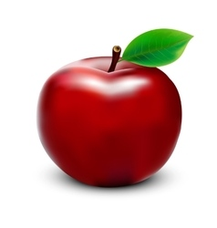 Red apple on white background vector image