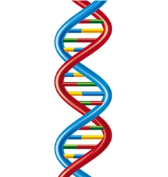 DNA-deoxyribonucleic acid vector image vector image