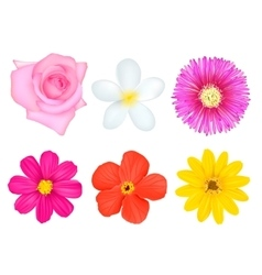 Isolated Colorful Flowers Set vector image vector image