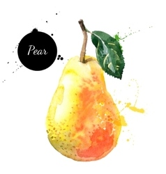 Hand drawn watercolor painting pear on white vector