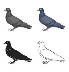 Pigeon icon in cartoon style isolated on white vector