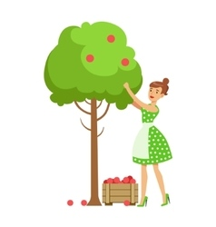 Woman picking organic apples from a tree vector