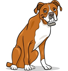 Boxer purebred dog cartoon vector