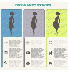 Pregnancy and birth infographics pregnancy stages vector