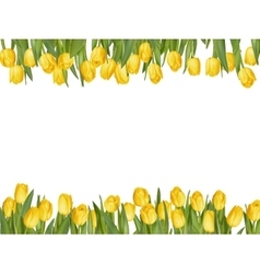 Isolated tulip frame arrangement EPS 10 vector image