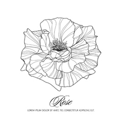 Greeting card with rose ink sketch vector