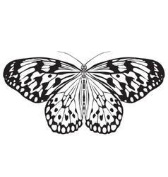 Butterfly Idea Leuconoe Sketch of Butterfly vector image