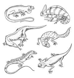 chameleon lizard green iguana komodo dragon vector image