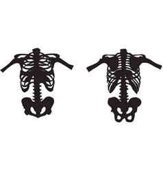 part of skeleton front and rear vector image