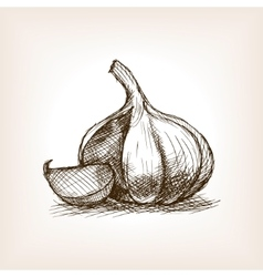 Garlic sketch style vector