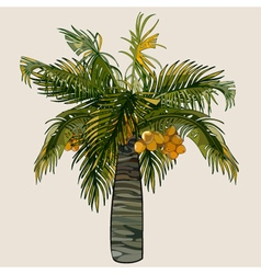 cartoon palm tree with coconuts vector image vector image