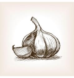 Garlic sketch style vector image vector image