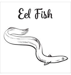 Live eel fish isolated on white background vector image vector image