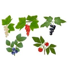 Set of berries vector