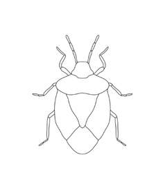 Shield bug palomena prasina sketch of shield bug vector