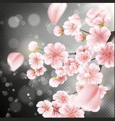 Cherry blossom sakura flowers eps 10 vector