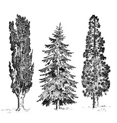 Set of hand drawn trees italian cypress and stone vector