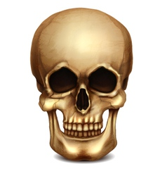 Realistic Skull vector image