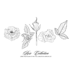 Rose sketch collection hand drawn flower set vector
