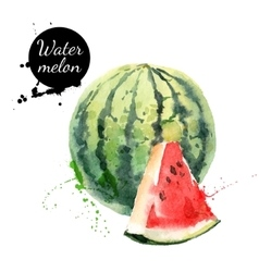 Hand drawn watercolor painting watermelon on white vector
