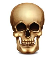 Realistic skull vector
