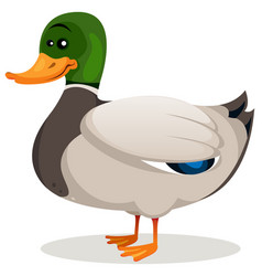 Cartoon mallard duck vector