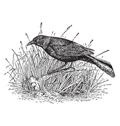 Crow blackbird vintage vector