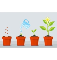 Plant growing stages timeline infographic of vector