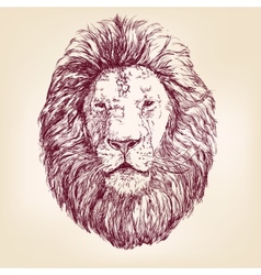 Lion hand drawn llustration realistic sketch vector