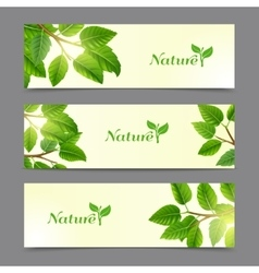 Green leaves eco banners set vector