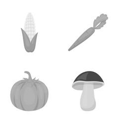 Corn corn vitamin carrots with tops pumpkin vector