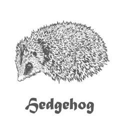 Hedgehog sketch drawing isolated on white vector image