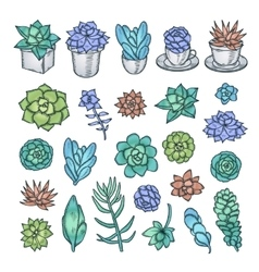 Hand drawn set of succulents pen graphic vector