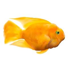 Parrot fish vector