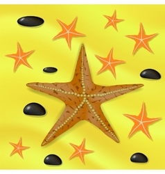 Plenty of Cushion Starfish on a Sandy Ocean Floor vector image