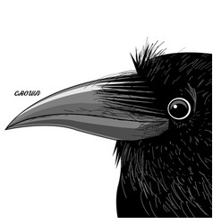 Portrait of a black raven vector