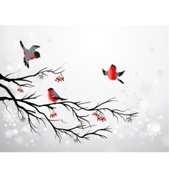 Branch and birds bullfinch vector image