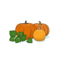 Pumpkin Isolated on White vector image vector image