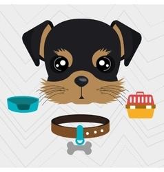 dog plate collar vector image