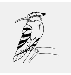 Hand-drawn pencil graphics hoopoe hornbill bird vector image
