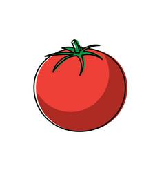 tomato vegetable fresh health raw tasty vector image
