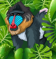Baboon sitting in the bush vector