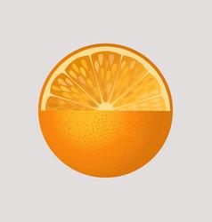Orange fruit isolated vector