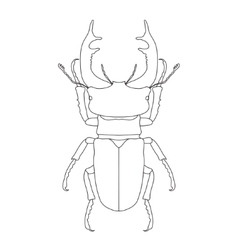 stag-beetle Lucanus cervus Sketch of stag-beetle vector image vector image