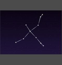 cygnus constellation vector image vector image