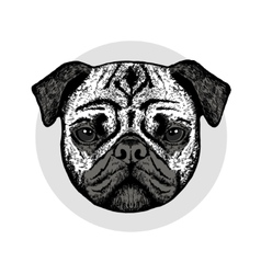 Graphically cute pug dog vector