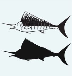 Sailfish saltwater fish vector